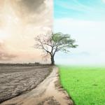 Mindset – die Orientierung auf Glck, Erfolg und Fülle